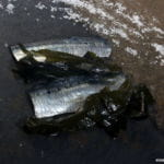 Ventresca de bonito con piel de sardina y crema de anchoa